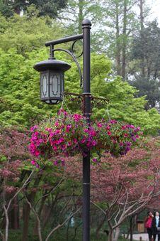 Free Hanging Flower Lamp Royalty Free Stock Image - 19147916