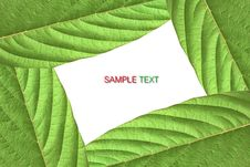 Free Green Leaf Stock Photo - 19148830