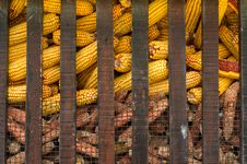 Free Yellow Corn Stock Image - 19149951