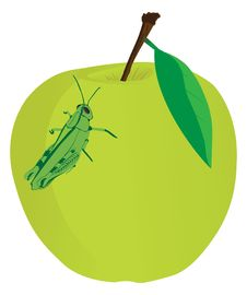 Free Apple Food Grasshopper Stock Photography - 19157572