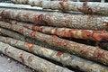Free Mangrove Lumber Royalty Free Stock Images - 19169829