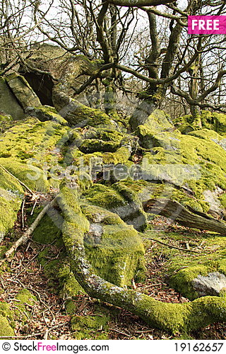 Free Twisted Roots Royalty Free Stock Photography - 19162657