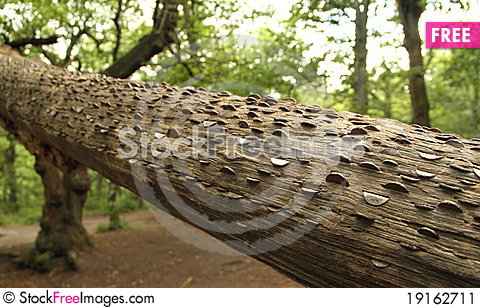 Free Money Tree Stock Image - 19162711