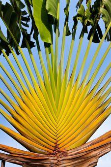 Free Tropical Palm Tree Stock Image - 19160361