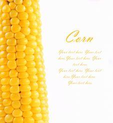 Free Corn Stock Image - 19164581