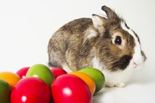 Free Bunny With Colored Eggs Royalty Free Stock Images - 19164849