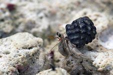 Free Hermit Crab Royalty Free Stock Image - 19165776