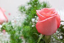 Free Red Rose Stock Image - 19166711