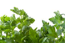 Free Parsley Royalty Free Stock Images - 19167089