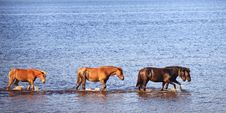 Free Horses In Water Of Lake Stock Images - 19167674