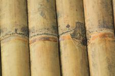 Free Texture Of Bamboo Royalty Free Stock Images - 19168169