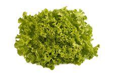 Free Fresh Lettuce Stock Photo - 19169060