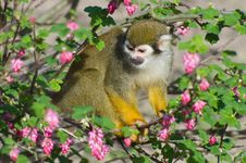 Free Monkey In The Bush Stock Photos - 19169083