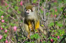 Free Monkey In The Bush Royalty Free Stock Photos - 19169128
