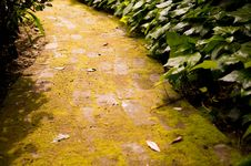 Free Follow The Moss Covered Road Stock Image - 19169331