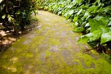 Free Moss Covered Path Royalty Free Stock Images - 19169359