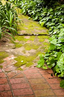 Free Moss Covered Path Royalty Free Stock Image - 19169366