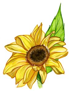 Free Sunflower Stock Photography - 19169622