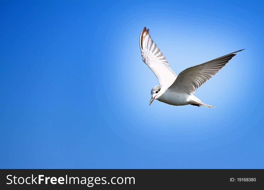 The Freedom bird