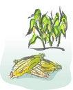 Free Corn Stock Photo - 19171730
