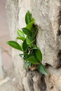 Free Plant In A Stone Stock Photos - 19175203