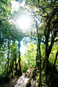 Free Mossy Forest Stock Photos - 19170973
