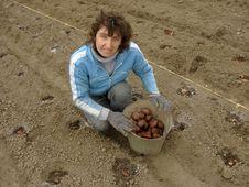 Free Planting Potato Royalty Free Stock Images - 19171549