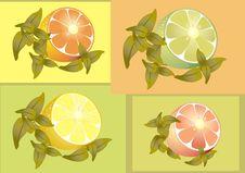 Free Citrus Fruits. Stock Photo - 19173470