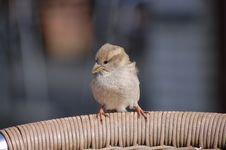 Free A Bird Stock Photos - 19175453