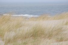 Free Grass At The Sea Stock Image - 19175531