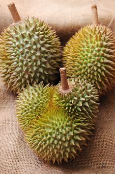 Free Tropical Durian Fruit Stock Photo - 19175940