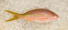 Free Yellowtail Snapper Fish On Ice Stock Photography - 19178032