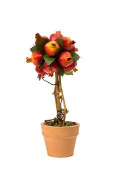 Free Pomegranate Royalty Free Stock Photography - 19178437