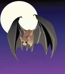 Free A Cute Lesser Long-Nosed Bat In Flight Stock Image - 19179391