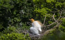 Free Egrets And Forests Royalty Free Stock Images - 191745059