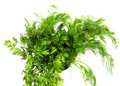 Free Dill And Parsley Stock Image - 19186281