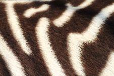 Free Detail Of Zebra Stock Image - 19181011