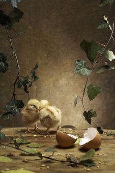 Free Two Chicken On The Table Royalty Free Stock Photos - 19181398