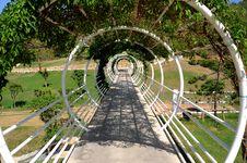 Grotto Tree Stock Photography