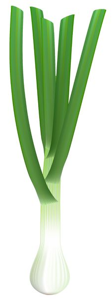 Free Fresh Green Onions On White Background. Royalty Free Stock Image - 19181746
