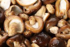 Free Mushrooms Stock Photography - 19182552