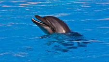 Free Dolphin Royalty Free Stock Photo - 19184065