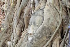 Free Buddha Head In Tree Roots, Ayutthaya, Thailand Royalty Free Stock Photo - 19184715