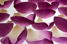 Free Lotus Petals Stock Images - 19185094
