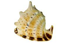 Free Sea Shell Stock Image - 19187721