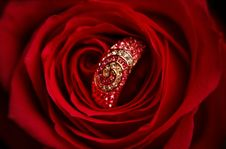 Free Ring With Diamonds In A Red Rose Royalty Free Stock Photos - 19189298