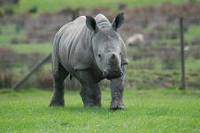 Free Baby White Rhino Stock Image - 19189791