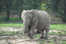 Free An African Elephant Stock Images - 19189804