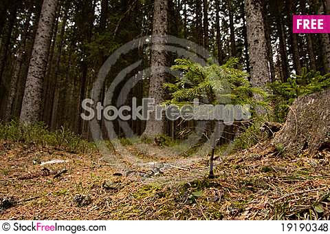 Free Mighty Oaks From Little Acorns Grow Royalty Free Stock Photos - 19190348