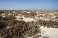 Free Vegetation On A Desert Island Royalty Free Stock Photos - 19190218